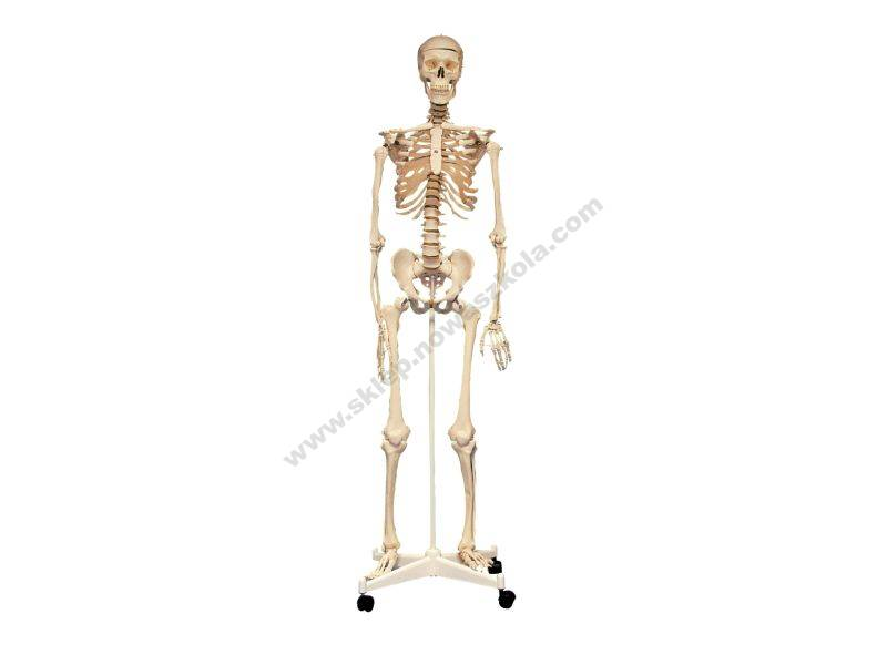 BD5302 3D lik kostura čovjeka