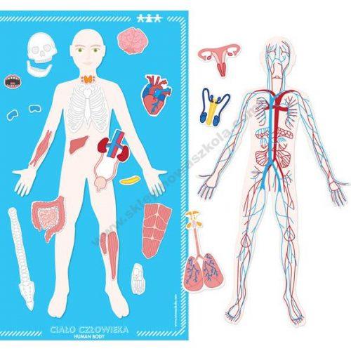 NS1364 Magnetska ploča ljudskog tijela
