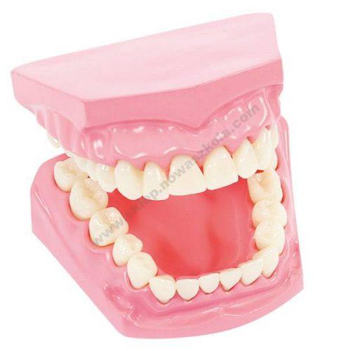 VO5456 3D lik oralne higijene